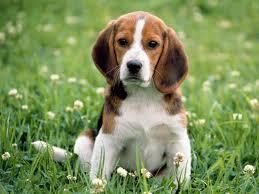 nei cani fosfatasi alcalina